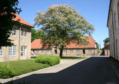 Akacietræ ved slotskirken