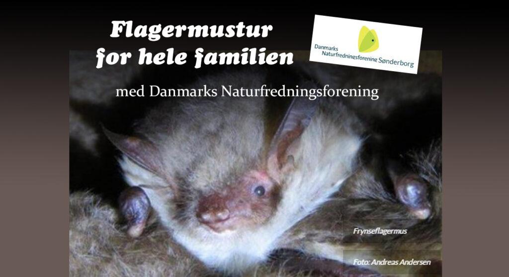 Augustenborg Skov: Flagermustur med Danmarks Naturfredningsforening