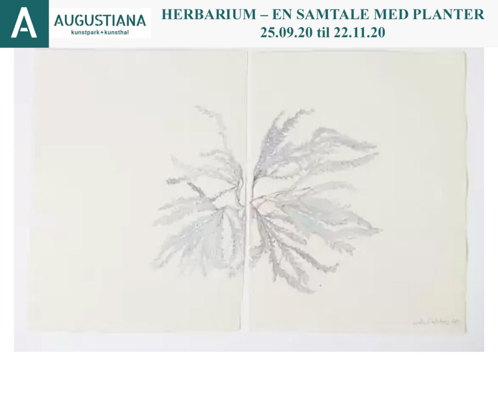 Augustiana Kunstpark & Kunsthal: HERBARIUM – en samtale med planter